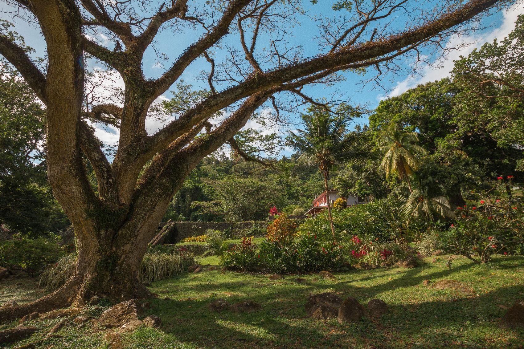 Habitation Céron : le zamana