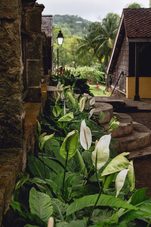 Habitation Clément : flowers