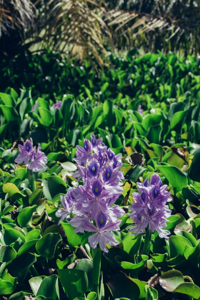 Plantation Trois Rivières : flowers