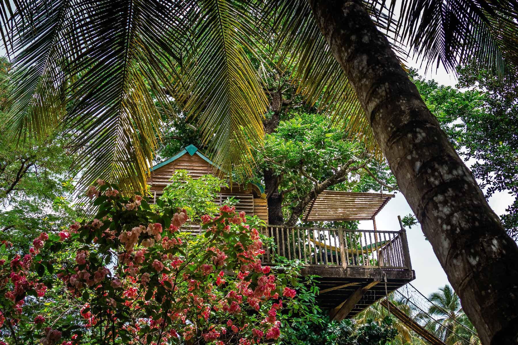 Une cabane dans les arbres aux Anses d'Arlet